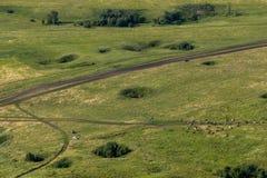 环境美化与母牛,湖,从山Toratau的森林视图 免版税图库摄影