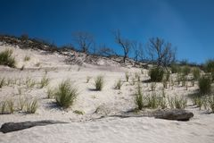环境美化与海滩、沙丘、海滩草、漂流木头和无云的蓝天 库存图片