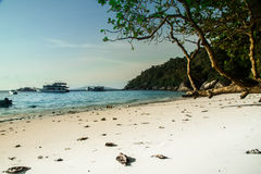 环境美化与白色沙子大海和绿色树 免版税库存照片
