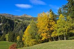 环境美化与秋天叶子颜色的落叶林 免版税图库摄影
