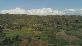 环境美化与米大阳台领域菲律宾,吕宋 股票视频