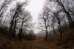 环境美化与美丽的雾在小山的森林里或通过有秋叶的一个神奇冬天森林落后在地面上 路 免版税库存照片