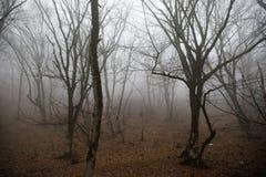 环境美化与美丽的雾在小山的森林里或通过有秋叶的一个神奇冬天森林落后在地面上 路 图库摄影
