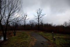 环境美化与美丽的雾在小山的森林里或通过有秋叶的一个神奇冬天森林落后在地面上 路 免版税库存图片