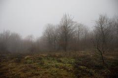 环境美化与美丽的雾在小山的森林里或通过有秋叶的一个神奇冬天森林落后在地面上 路 库存图片