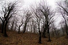 环境美化与美丽的雾在小山的森林里或通过有秋叶的一个神奇冬天森林落后在地面上 路 库存照片