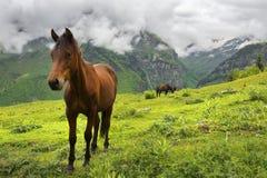 环境美化与美丽的马在高加索山脉,上部Svaneti,乔治亚 图库摄影