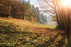 环境美化与蓝天和秋天木头与树并且掠过在草原小山 免版税库存图片
