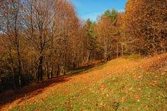 环境美化与蓝天和秋天木头与树并且掠过在草原小山 免版税图库摄影