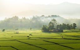 环境美化与雾和薄雾早晨 免版税图库摄影
