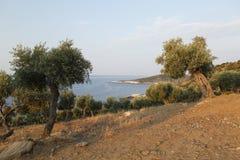 环境美化与水和岩石在Thassos海岛,希腊 免版税图库摄影