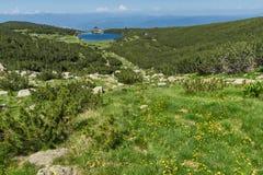 环境美化与黄色花在Bezbog湖, Pirin山附近 免版税库存照片