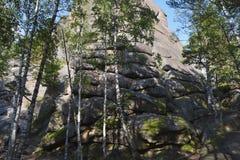 环境美化在小山和岩石在一个密集的森林里 免版税库存图片