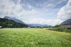 环境美化在有新鲜的绿色草甸的阿尔卑斯和开花的花和积雪覆盖的山上面在背景中 免版税库存图片