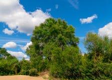 环境美化在用灌木草盖的一个沙滩在树的中心 免版税库存照片
