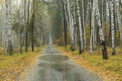 环境美化在薄雾和多雨天气在混杂的森林里 免版税库存照片