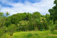 环境美化在Furnas谷,圣地米格尔海岛,亚速尔群岛,葡萄牙 库存图片
