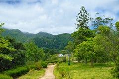 环境美化在Furnas谷,圣地米格尔海岛,亚速尔群岛,葡萄牙 免版税库存图片