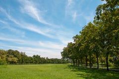 环境美化的公园 库存照片