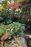 环境美化的庭院日语 库存照片