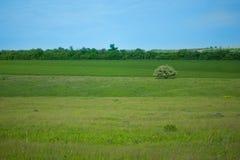 环境美化,在领域中的一棵开花的偏僻的树,草甸和森林 背景 免版税图库摄影