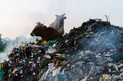 环境退化 免版税图库摄影