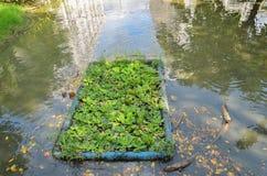环境问题,废水,工业污水 库存照片