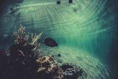 环境,小珊瑚礁生态系 免版税库存图片