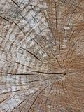 环形纹理树干木头 图库摄影