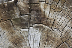 环形纹理结构树 库存照片