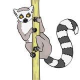 环纹尾的狐猴 E 在竹子,木头分支的动物猫狐猴  ?? 向量例证