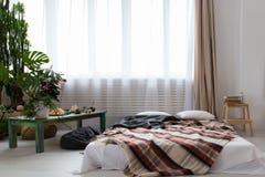 现代单室公寓的内部与许多的植物和在地板上的一张床 图库摄影