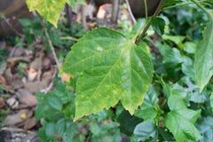 现代唯一绿色叶子孤立 库存照片