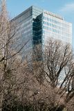 现代大厦有长方形,并且正方形窗口形成与清楚的蓝天和不生叶的树在前景在札幌 免版税图库摄影