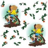 现代女孩采摘从树的杏子 免版税库存照片