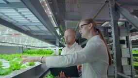 现代科学家参与健康食品食物生产的发展通过生长他们在垂直的自动化的农场 股票录像