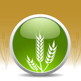 现代符号麦子 库存图片