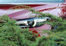 现代红色车车灯在绿色灌木后的 库存图片