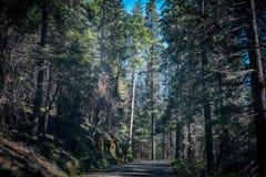 现代路通过古老森林在美洲杉国家公园 库存图片