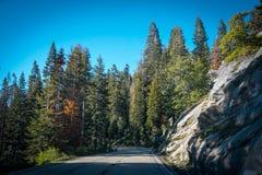 现代路通过古老森林在美洲杉国家公园 免版税库存照片