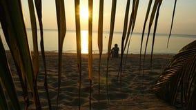 现出轮廓单独人休息坐海滩反对海的背景和日落,看法通过分支 股票录像