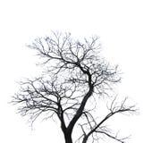 现出轮廓在可怕的白色与裁减路线的背景或死亡隔绝的死的树 库存图片