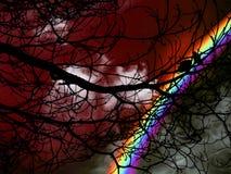 现出轮廓在树和红色天空日落的双鸟 免版税库存照片