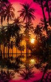 现出轮廓在海滩的可可椰子树在日落 免版税图库摄影
