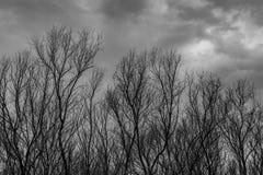 现出轮廓在黑暗的剧烈的灰色天空的死的树并且覆盖可怕,死亡和和平概念的背景 万圣夜天 图库摄影