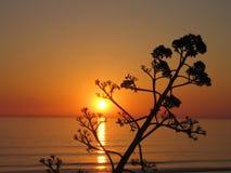 现出轮廓日落结构树 免版税图库摄影