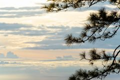现出轮廓松树在日出 库存照片