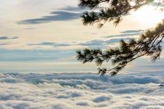 现出轮廓松树在日出 免版税库存照片