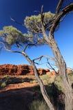 现出轮廓树在Canyon, Outhback澳大利亚人国王 免版税库存图片
