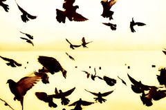 现出轮廓海鸥群在海的 库存图片
